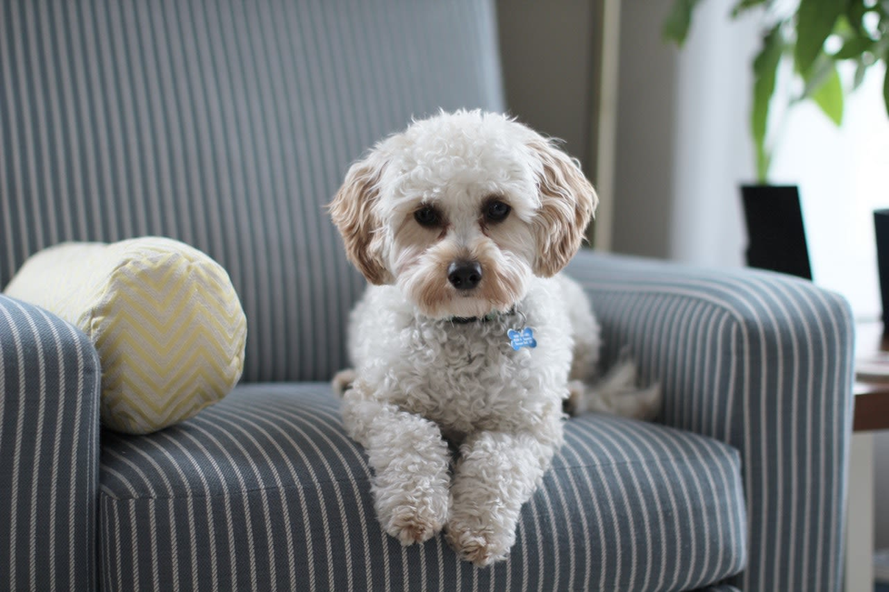 Top 15 Most Popular Small Dog Breeds