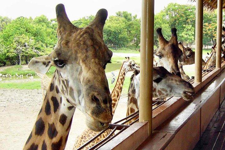 Bangkok Safari World Tour