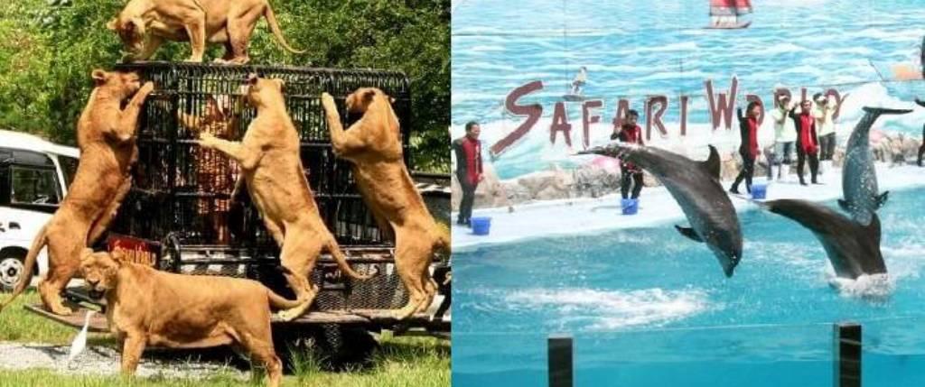 Bangkok Safari World Tour & Marine Park