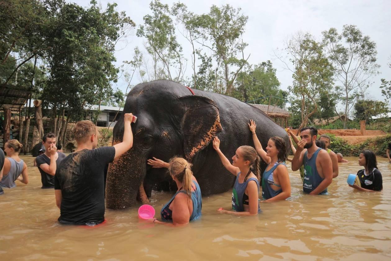 Volunteer Elephant Care Training Program 2D/1N