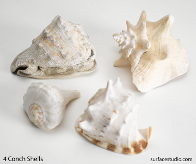 Four Conch Shells (4) $35 Each