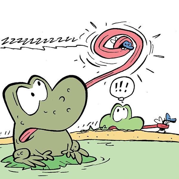 Wart & Mort Frogs