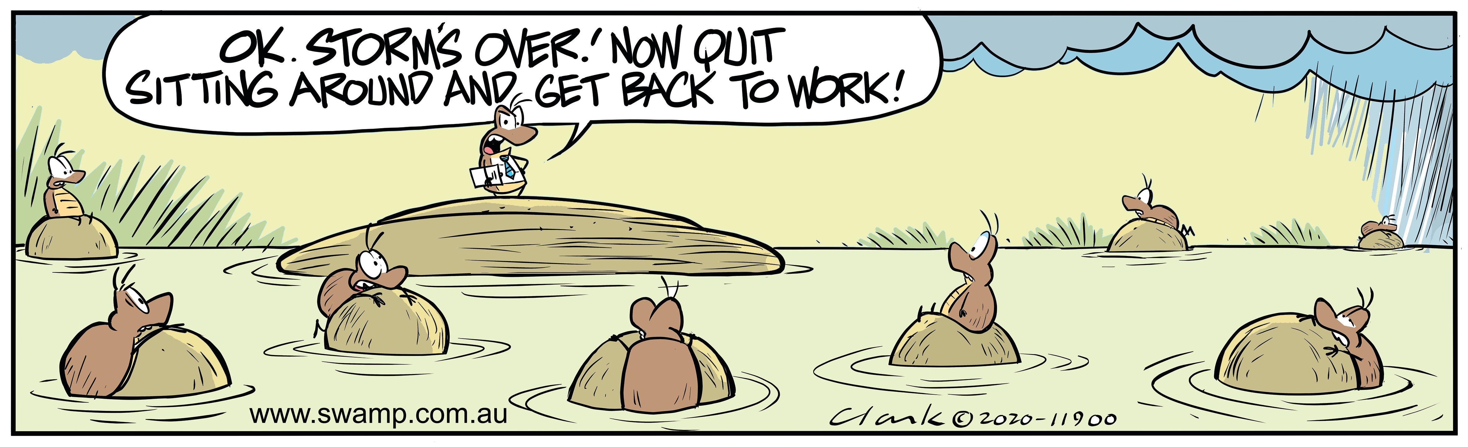 Dungle Beetles Hustled Back to Work