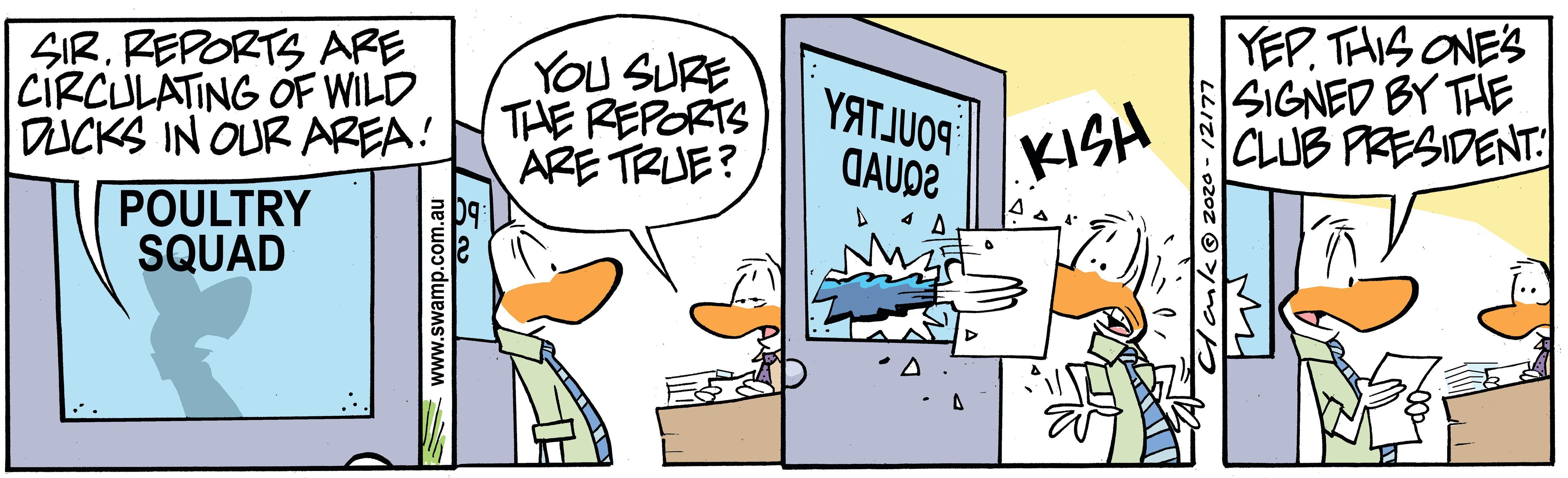 Reports of Wild Ducks