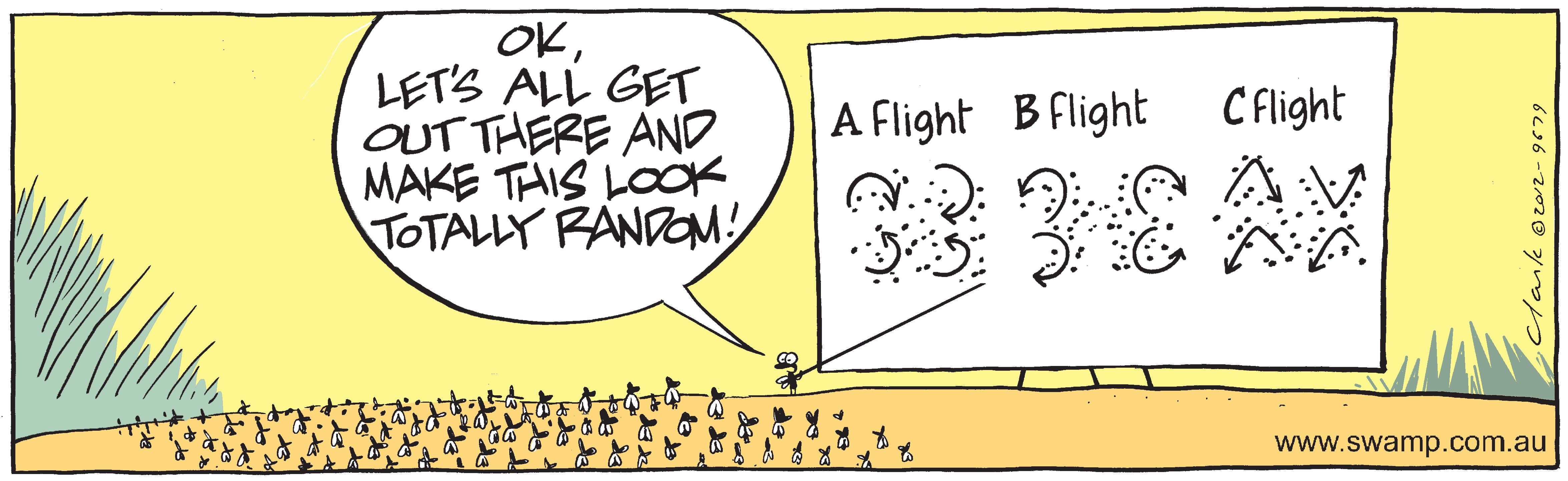 Flies Flight Plans