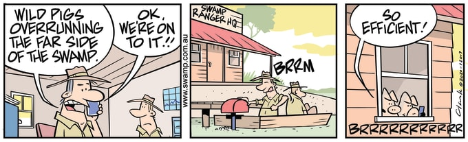 Swamp Cartoon of the Day - Wild Pigs Running Amok