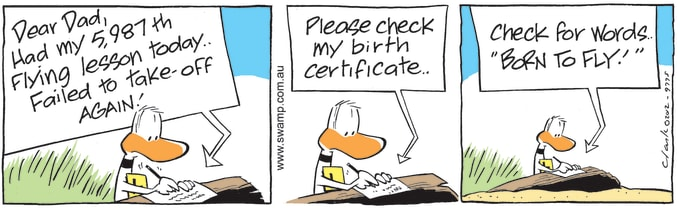 Swamp Cartoon of the Day - Ding Duck has 5987th Flying Lesson