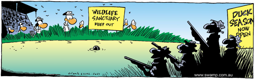 Swamp Cartoon - Cricket BallJune 8, 2002