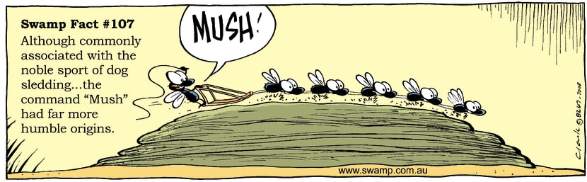 Swamp Cartoon - Flies on Cowpat ComicFebruary 12, 2008