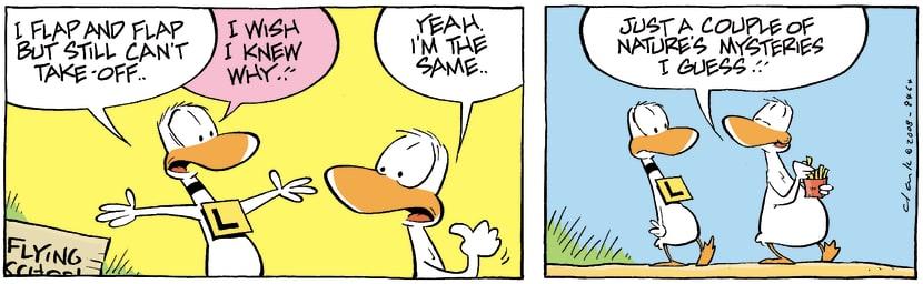Swamp Cartoon - One of Lifes MysteriesOctober 22, 2008