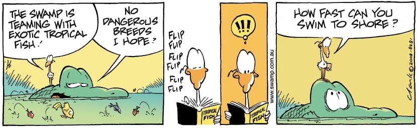 Swamp Cartoon - Exotic Fun 1November 11, 2008