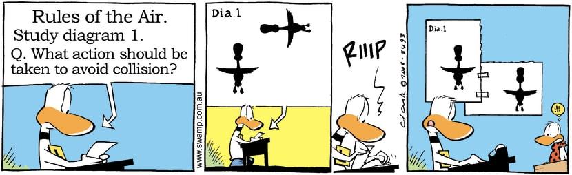 Swamp Cartoon - Ding Duck Air Rules ComicNovember 25, 2008