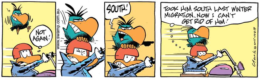 Swamp Cartoon - Bludgerigar Migration ComicJuly 8, 2015
