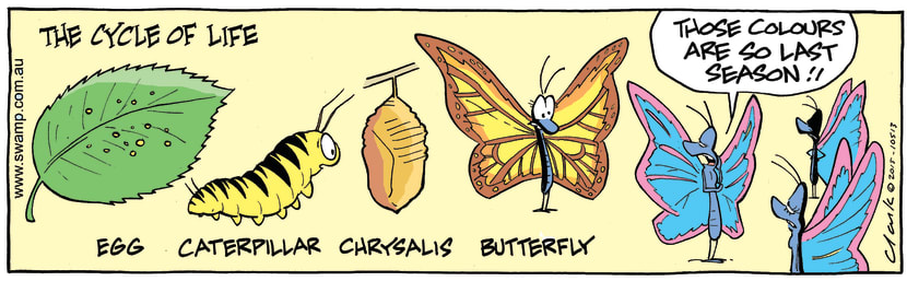 Swamp Cartoon - Butterfly Life Cycle ComicSeptember 9, 2015