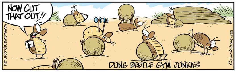 Swamp Cartoon - Dung Beetles Gym JunkiesNovember 27, 2019