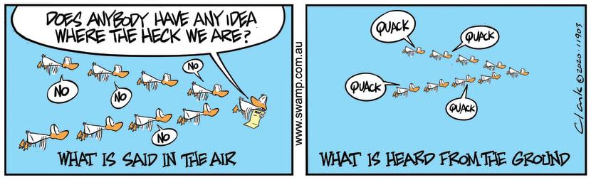 Swamp Cartoon - Aviator Ducks LostFebruary 25, 2020