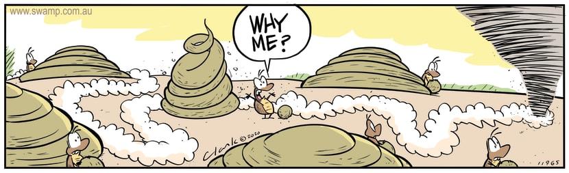 Swamp Cartoon - Dung Beetle Why MeMay 6, 2020