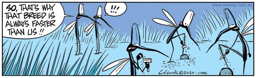 Swamp Cartoon - Fast Mosquito BreedMay 26, 2020