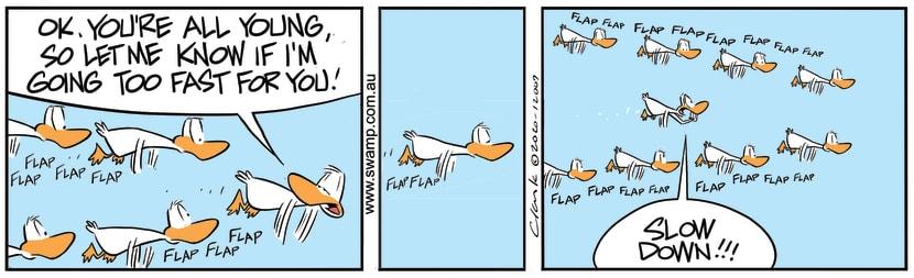 Swamp Cartoon - Aviator Ducks Slow DownJune 26, 2020