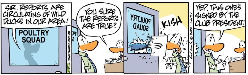 Swamp Cartoon - Reports of Wild DucksJanuary 18, 2021