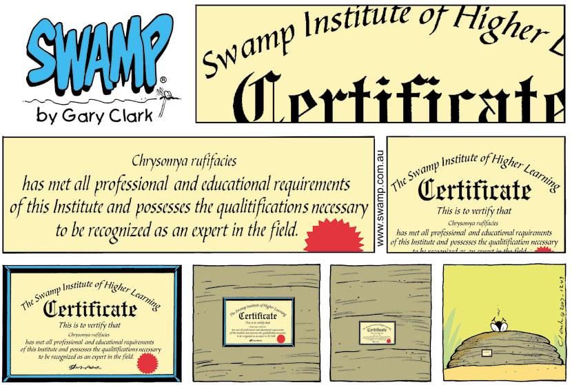 Swamp Cartoon - Swamp Certificate Higher LearningJuly 18, 2021