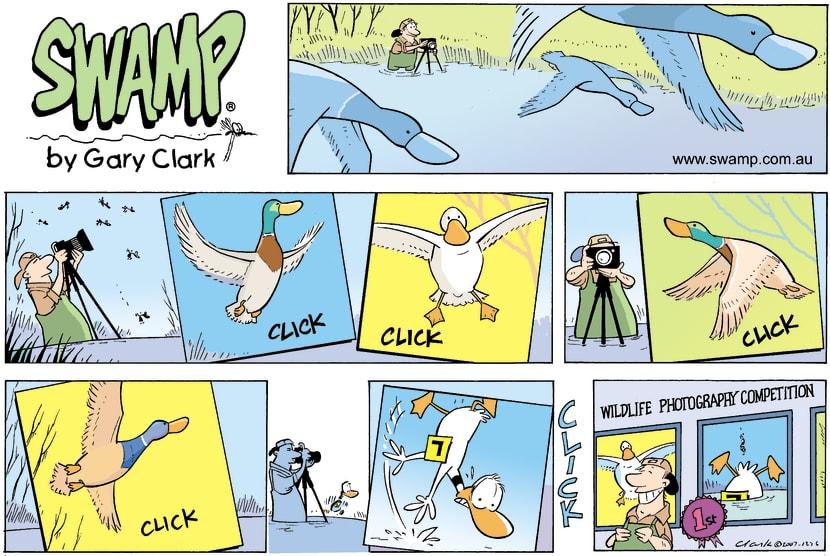 Swamp Cartoon - Recording the evidenceJanuary 6, 2008
