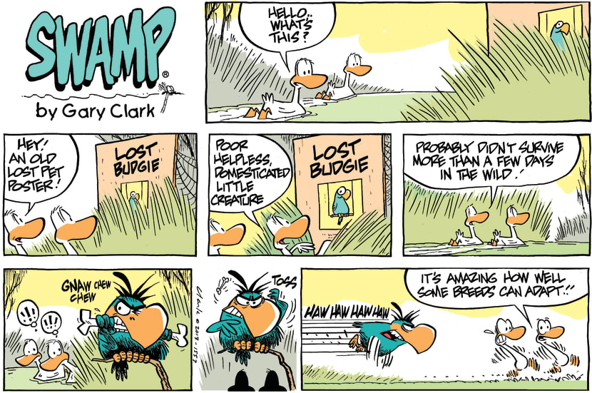 Swamp Cartoon - Lost Budgie CartoonMay 19, 2013