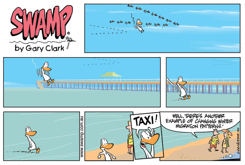 Swamp Cartoon - Swamp Duck Taxi ComicSeptember 23, 2018