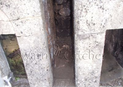 Bees in walls - Honey bees in church wall window