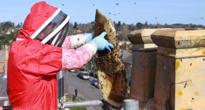 Swarm Catcher Honey Bee Removal