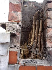 Honey bee removal from chimney in South Wales