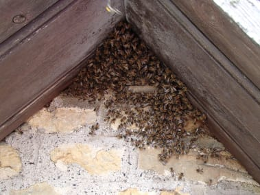 Bruton Somerset bee nest roof cutout 11
