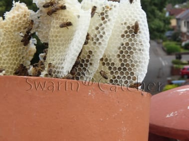 Honey bee chimney cutout in Llandaff