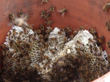 Honey bee chimney cutout in Llandaff