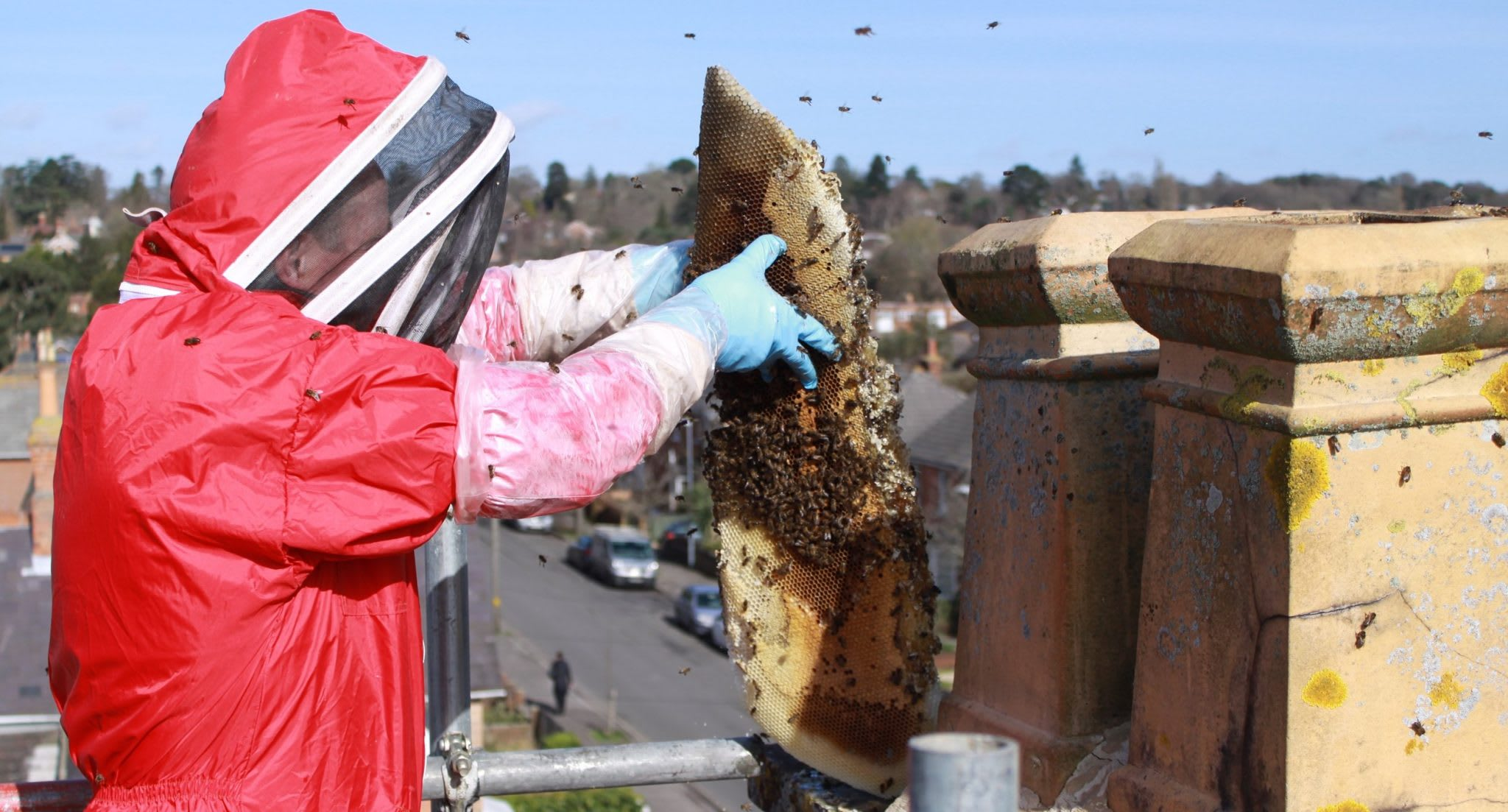 Everything you need to know about removing honey bees in a chimney