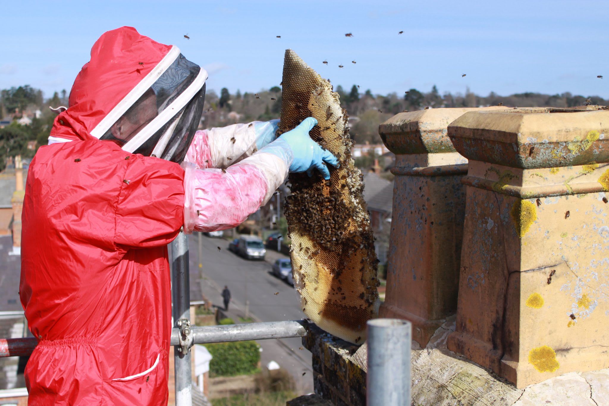 Everything you need to know about removing honey bees in a