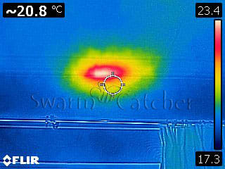 Bees in walls - Thermal image of a bee nest in wall from inside - Bristol