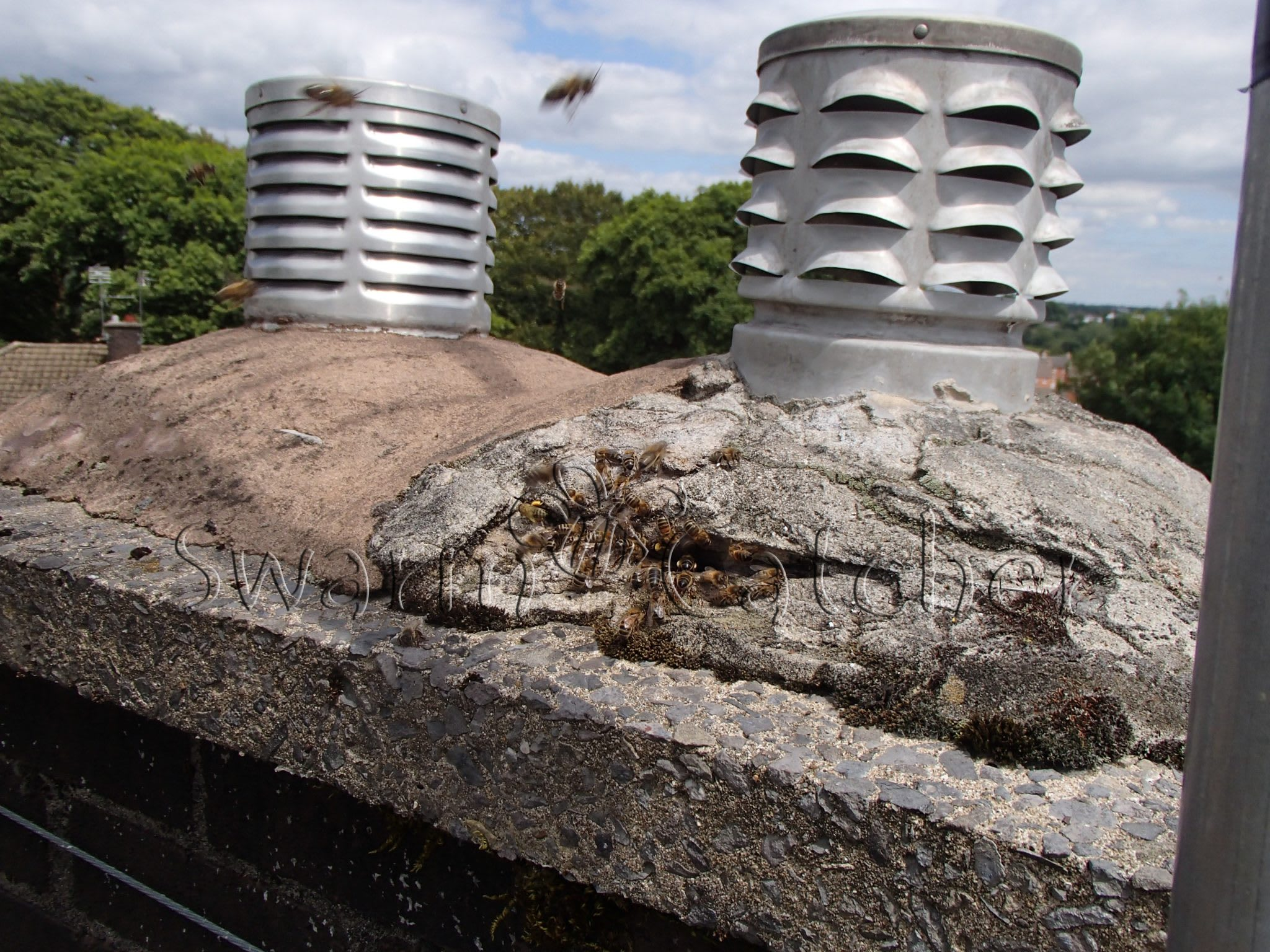 Honey bees in chimney - Here's what you need to know