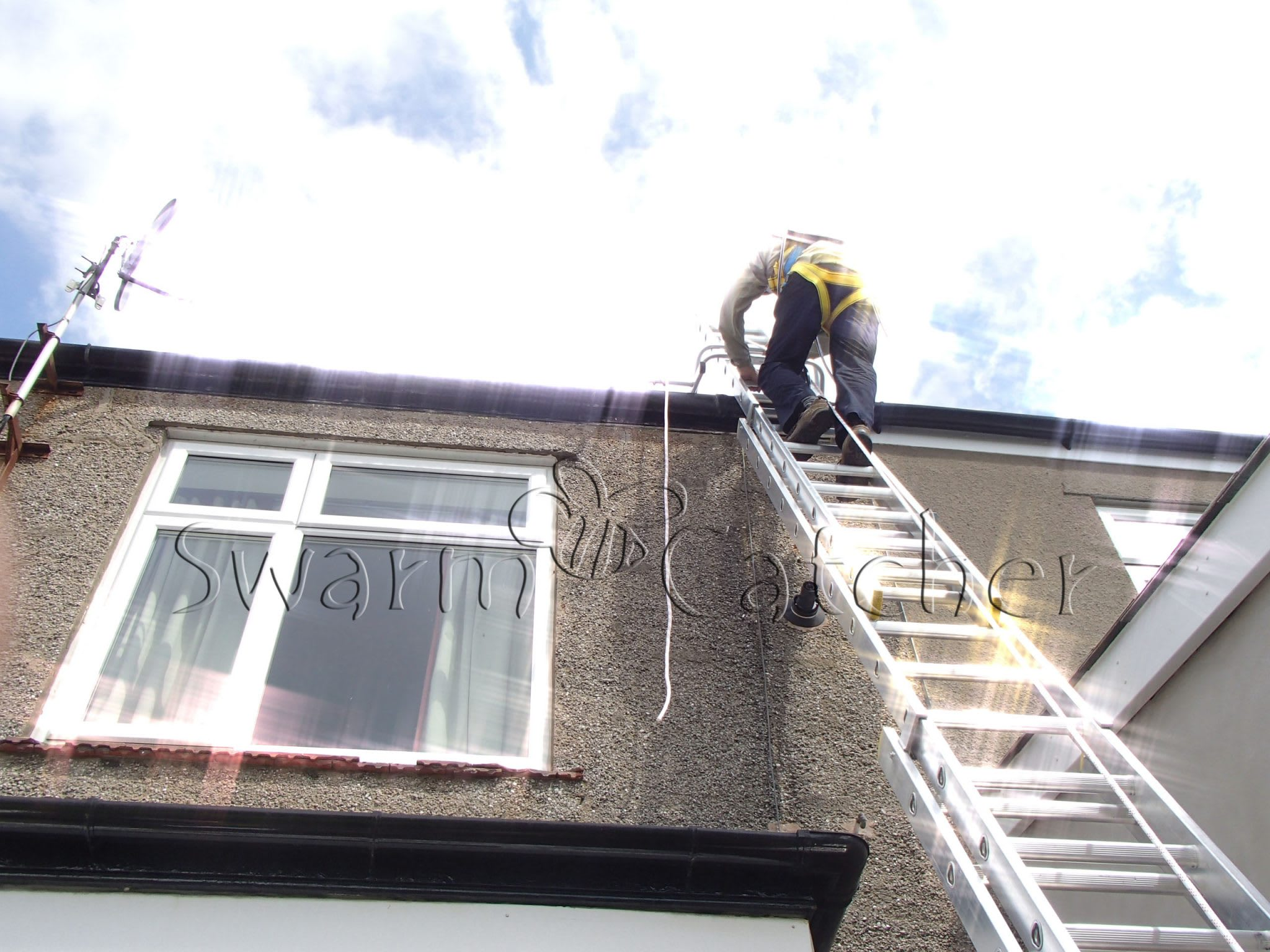 How To Remove Honey Bees From Chimney Safely