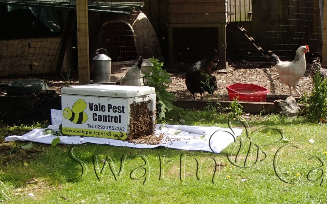 Should honey bees be poisoned
