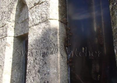 Bees in walls - Honey bee nest in church wall window slot behind perspex
