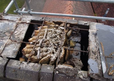 Removing and relocating honey bees in a chimney