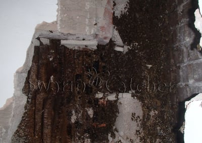 Bees in walls - Opening up a bee nest behind an internal blockwall - Rhonda bee removal