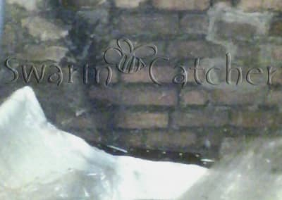 Bees in walls - There is a honey bee colony somewhere behind this attic brick wall