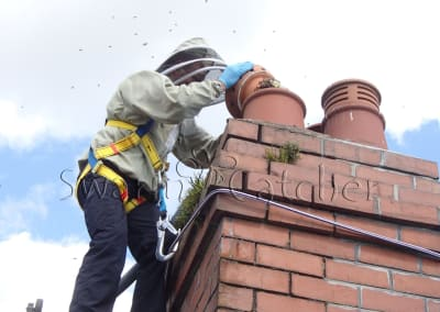 Honey bees in chimney