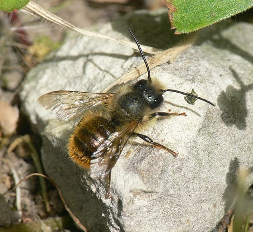 other bees