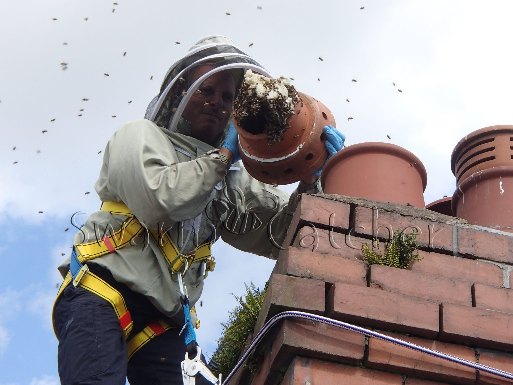 Honey bees Live honey bee colony removal of honey bees in chimney
