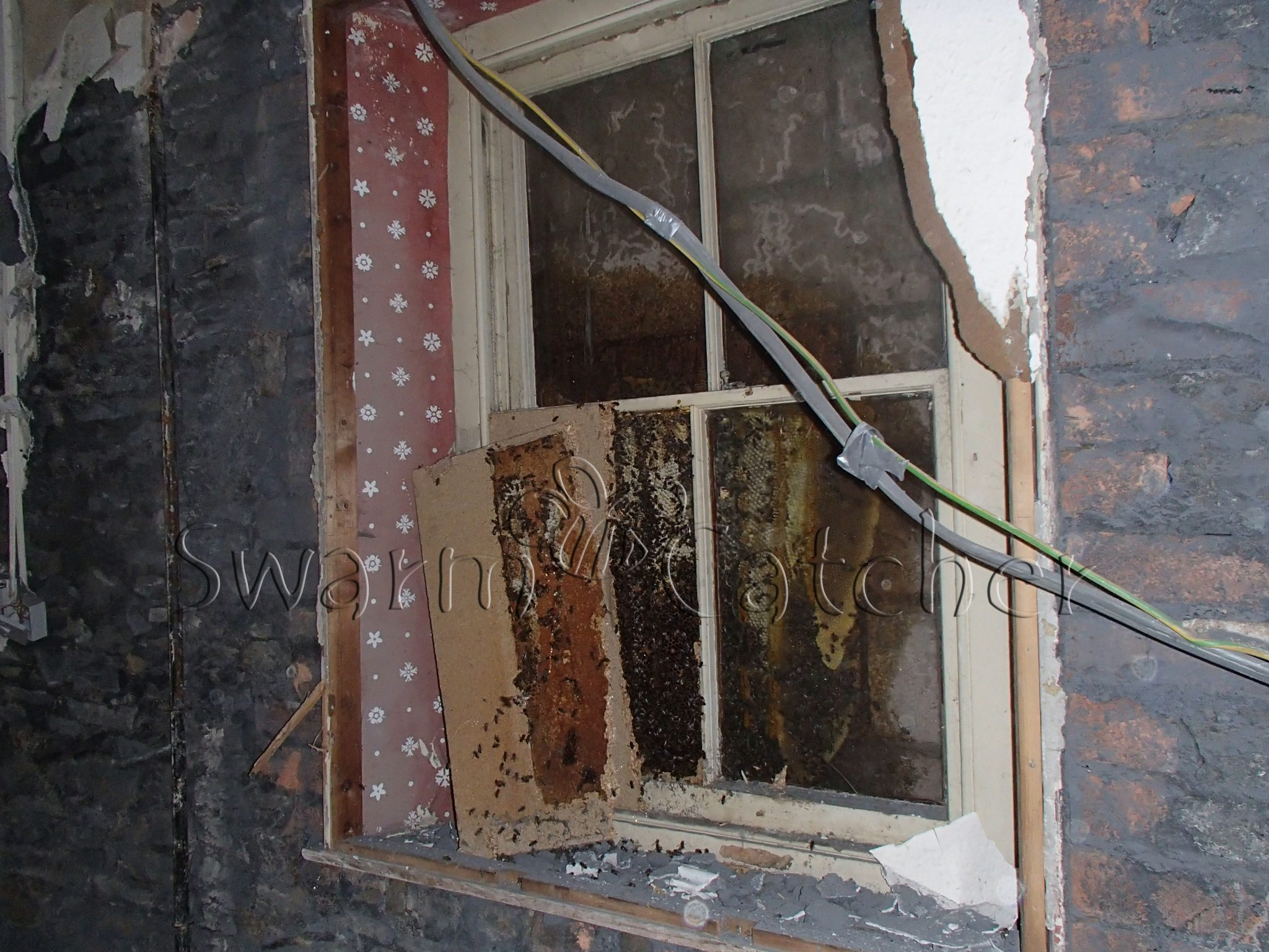 Bees in walls - Bee nest removal from blocked up window
