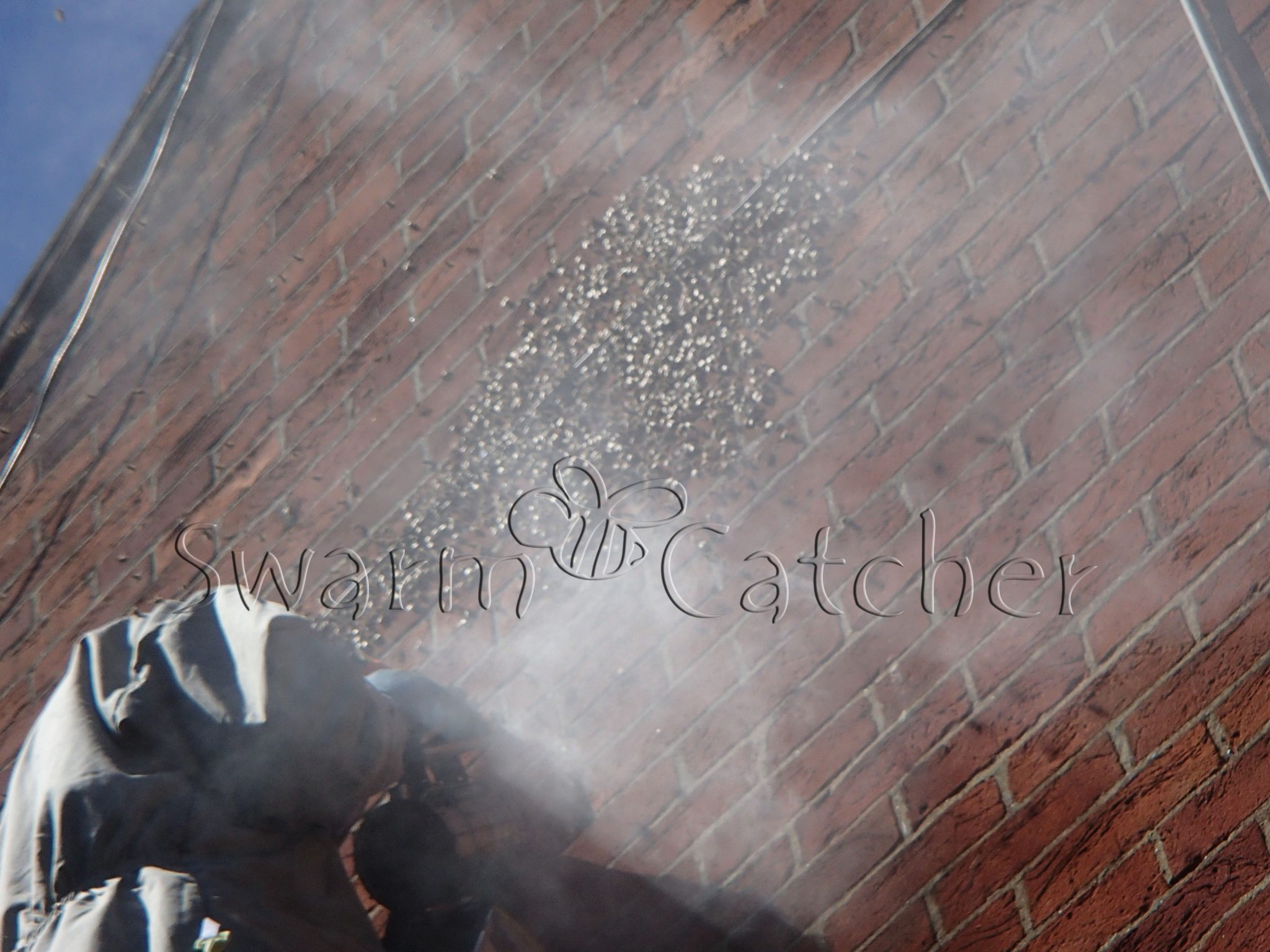 Bees in walls - Honey bee swarm smoked after arriving 3 days before