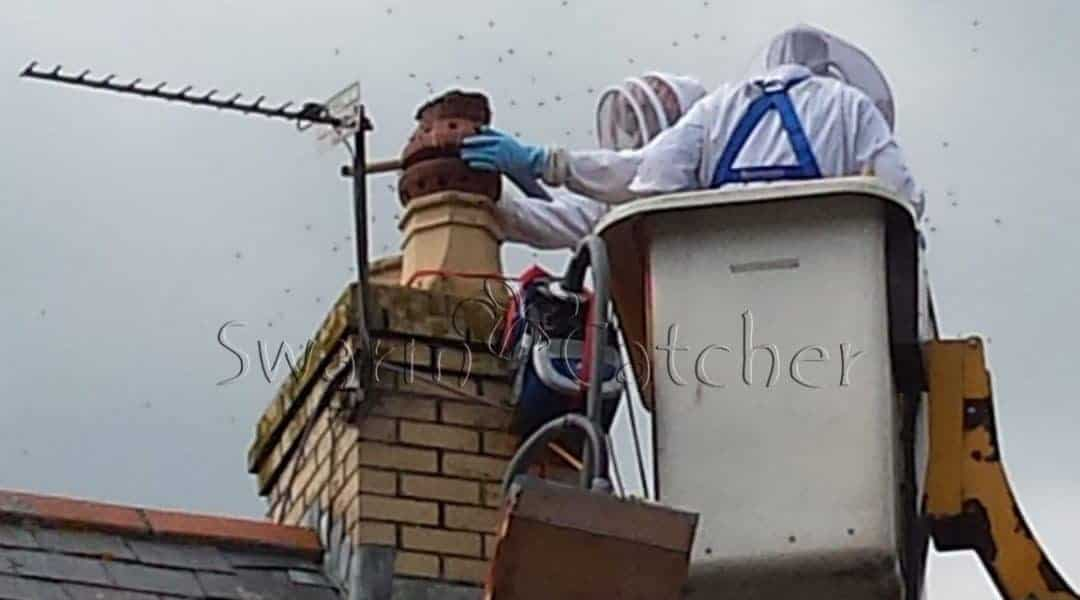 Live honey bee colony removal of honey bees in chimney using an EMP (cherry picker)
